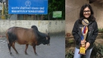 UPSCના ઇન્ટરવ્યુમાં સવાલ, મુંબઇ IITમાં કેમ ફરે છે ગાય, મળ્યો રોચક જવાબ
