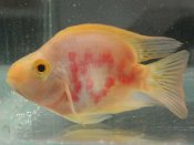 વેલેન્ટાઇન ડે ઉજવી રહેલી આ માછલી કહે છે ILU