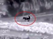 Video: ગધેડી સાથે સેક્સ કરતો પકડાયો ISISનો આતંકી