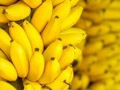 શું ડાયાબિટીઝમાં પણ કેળા ખાવા જોઈએ?