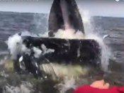 Video: જ્યારે 12 માળથી મોટા કદનો સમુદ્રી જીવ આવ્યો સામે..
