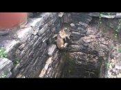 Video: સિંહ બાળને બચાવવા 80 ફૂટ ઊંડા કૂવામાં ઉતર્યો એક માણસ