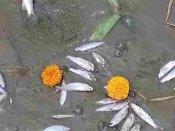 ગંગા સફાઇ યોજના નિષ્ફળ, પ્રદુષણ ફેલાવાથી મોટી સંખ્યામાં માછલીઓ મરી