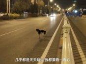 Video: માલિકનું મૃત્યુ થયું ત્યાં 80 દિવસ સુધી બેસી રહ્યો કુતરો