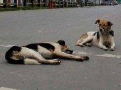 મહિલાને આવારા કુતરાઓને ખાવાનું ખવડાવાનું ખુબ જ મોંઘુ પડી ગયું