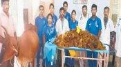 ગાય દર્દથી પીડાતી હતી, સર્જરી કરી તો 52 કિલો પ્લાસ્ટિક નીકળ્યું
