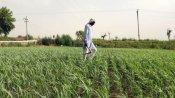 પંજાબ-હરિયાણામાં કૃષિ બિલનો વિરોધ, જાણો યુપીમાં ખેડૂતો ચુપ કેમ?