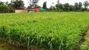 ગુજરાતઃ આદિવાસી વિસ્તાર ડાંગ હવે બનશે ઑર્ગેનિક ખેતી કરતો જિલ્લો