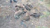 Bird Flu: સુરેન્દ્રનગરમાં મૃત પક્ષીઓ મળી આવ્યા, તંત્રમાં દોડધામ