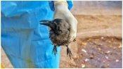 રાજધાનીમાં બર્ડ ફ્લુએ દીધી દસ્તક, મૃતક પક્ષીઓના સેમ્પલ પોઝિટીવ