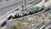 બર્ડ ફ્લુનુ જોખમઃ ગુજરાતમાં મૃત મળ્યા 40 કાગડા અને બગલા, તપાસ માટે ભોપાલ મોકલાયા સેમ્પલ