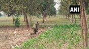 પશ્ચિમ બંગાળમાં ચૂંટણી વચ્ચે મુર્શિદાબાદમાં મળ્યા 14 બૉમ્બ, 5માં તબક્કાના વોટિંગ દરમિયાન ઉપયોગ કરવાની શંકા