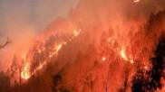 Fact Check: ઉત્તરાખંડના જંગલોમાં લાગેલી ભીષણ આગની સચ્ચાઈ શું છે?