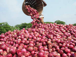 Onion Prise Soar Up In Coming Days