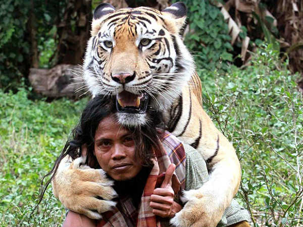 Bengal Tiger With Best Friend