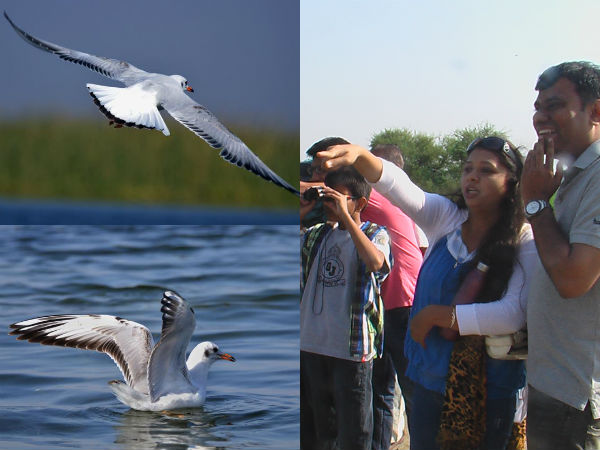 Foreign Bird Coming To Vadhvana Lake