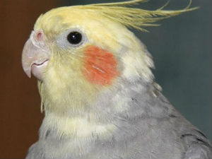 Parrot Saves Owners Life In House Fire In Uk