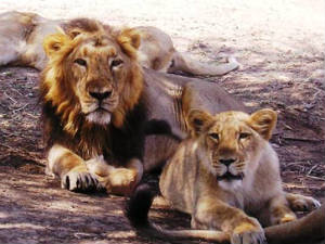 Gir National Park Will Be Closed 4 Months From June
