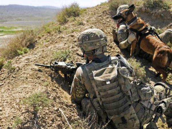 Militants Killed Afghanistan
