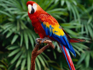 Parrot Owner Gets Payout Plane Noise Kills His Bird