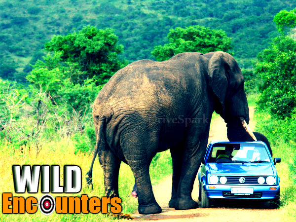Top 5 Horrible Animal Encounters On Cars