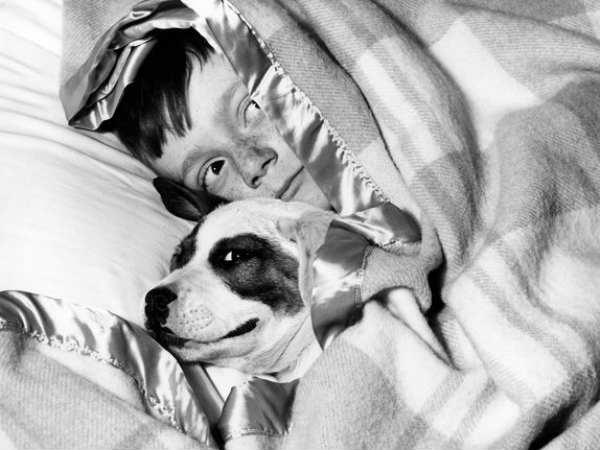 Us Pet Poll Most Prefer Dogs 18 Percent Want Dinosaur