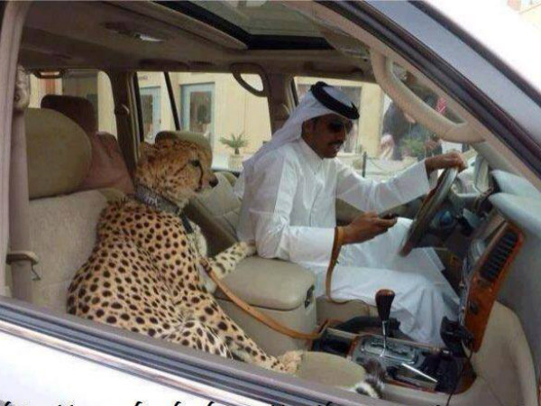 Funny Automobile Picture Collection