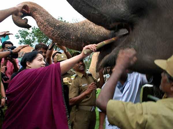 Jayalalithaa V S Baby Elephant Mudumalai Tiger Reserve