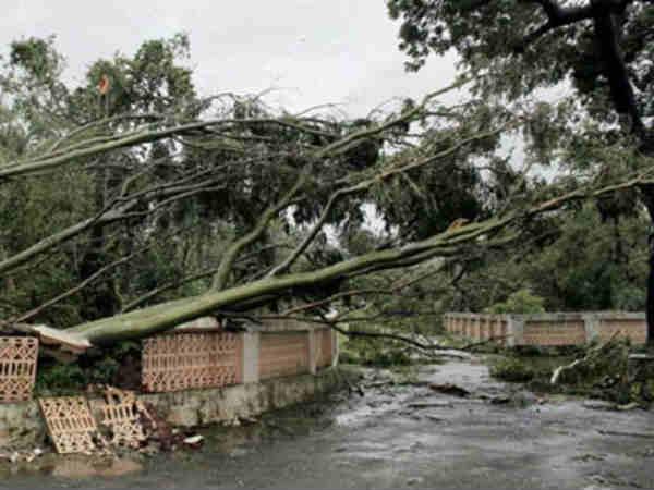 Odisha Lost 26 Lakh Trees After Cyclone Phailin