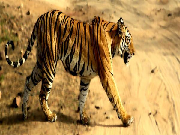 Top 20 Wildlife Sanctuaries National Park India