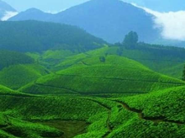 Devikulam Tourism Rejuvenating Landscapes