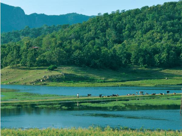 Must Visit Once Gujarat S Vijaynagar Polo Forest