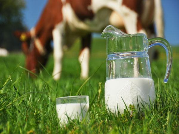 Cow Milk Or Buffalo Milk Which Is Better You