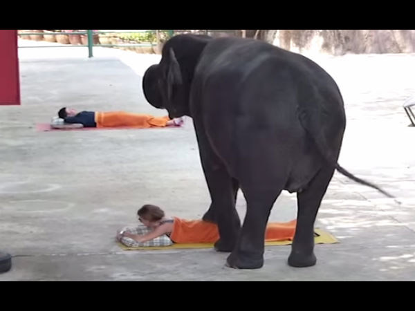 Thailand Tourists Get Massaged 3 Ton Elephants