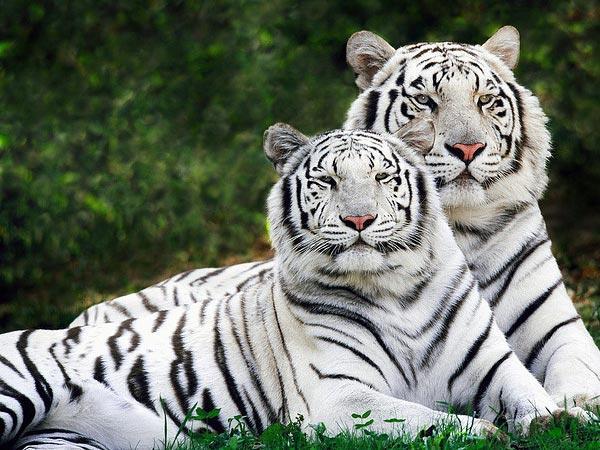 Wildlife Sanctuaries India