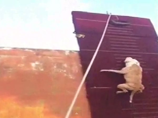 Video This Dog Can Actually Fly More Than 10 Feet The Height