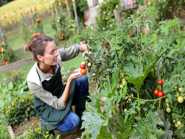 Reasons Why You Should Have Kitchen Garden