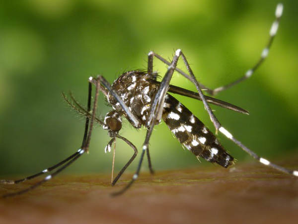 How Much A Dengue Mosquito Bite Can Cost To You