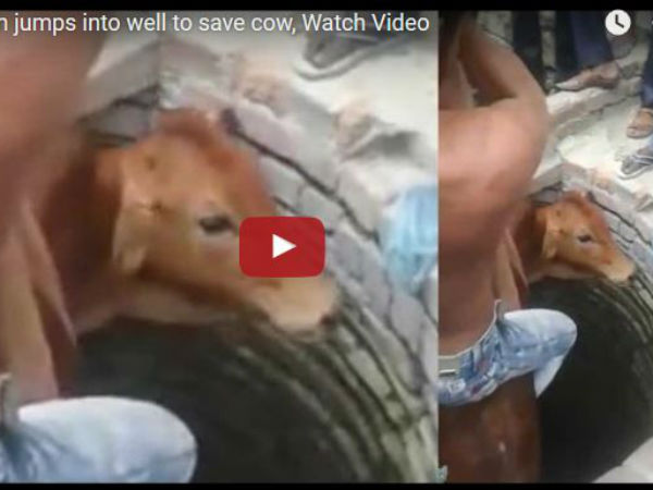Muslim Man Jumps Into Well Save Cow Lucknow