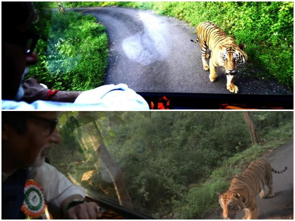 In Pics Amitabh Bachchan Getting Chased Tiger 4 Km Mumbai
