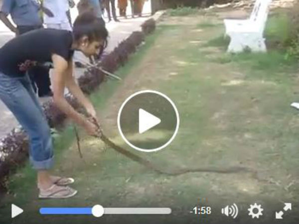 Dare Not Do Do This At Own As This Lady Controls The Big Snake