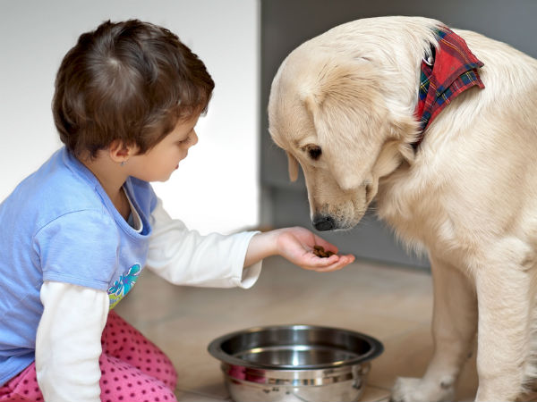 Reasons Why Your Pet Is Not Eating