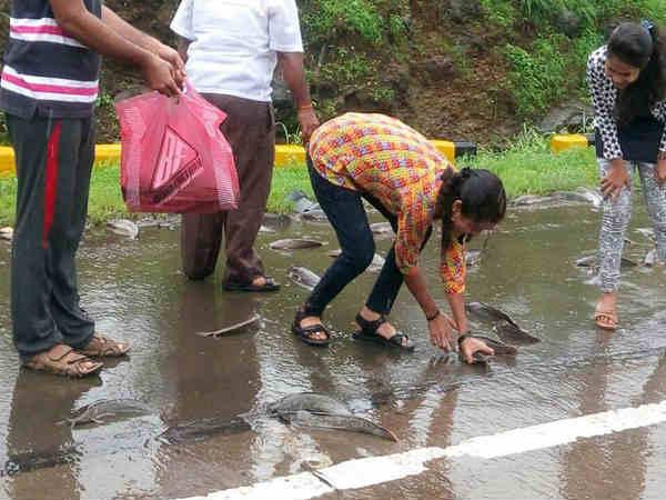 Fish Rain On Mumbai Pune Expressway