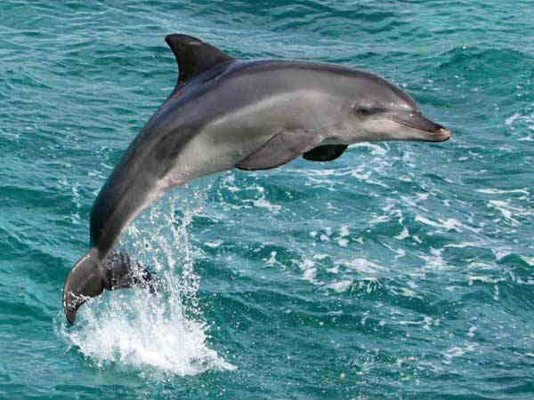 Dolphins Destinations India