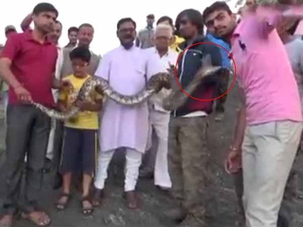 Selfie With Python See Video Think Again