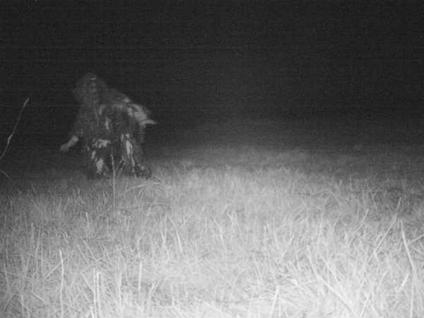 જંગલી પ્રાણીને પકડવા માટે લગાવ્યો હતો કેમેરો, પણ કેમેરા દેખાયું આ