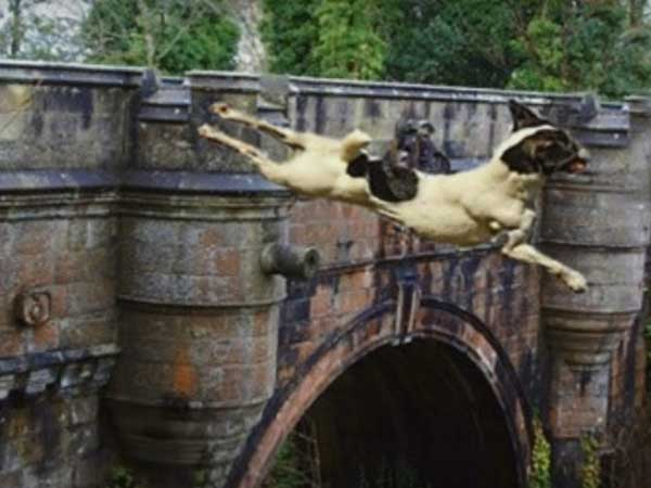 Have You Heard About Dogs Suicide Bridge