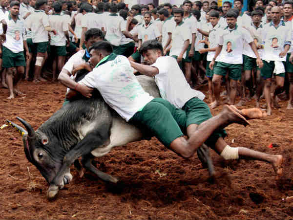 Jallikattu Protests Updates Train Stopped Near Madurai In Due To Forceful Evication At Marina Beach