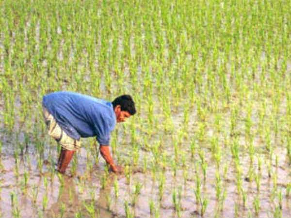 ગુજરાત બજેટ 2017: ખેડૂતોની સબસીડીમાં 20% વધારો