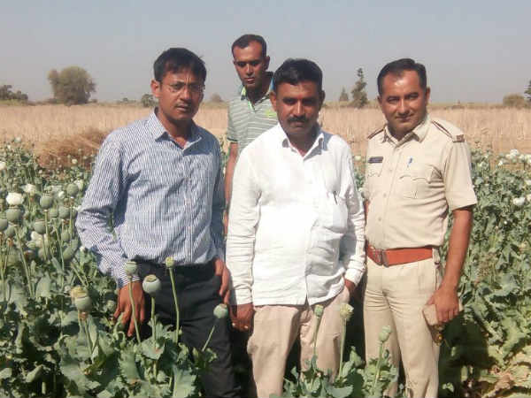 Tharad Police Raid Found More Than 5000 Plants Opium Farm